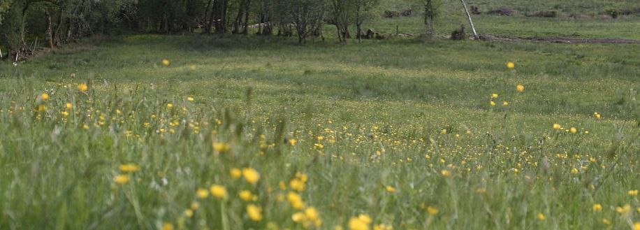 Prairie de fauche