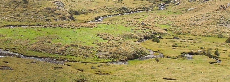 Vue sur une tourbière haute active des Pyrénées