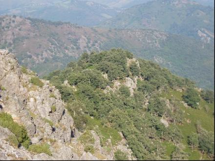 Chênaies du piémont pyrénéen à chênes tauzins et pédonculés - Christophe Chauliac (ONF)