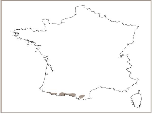 Répartition des éboulis calcaires montagnards à subalpins des Pyrénées