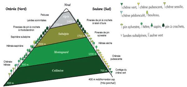 Étages de la végétation des Pyrénées
