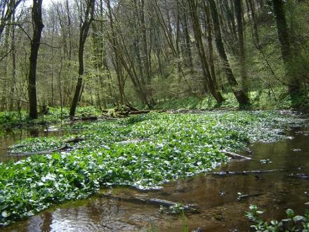 Forêts mixtes riveraines des grands fleuves - E. ROUYER