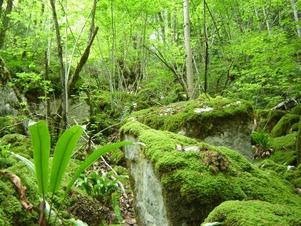 Forêts de pentes, éboulis et ravins - E. ROUYER