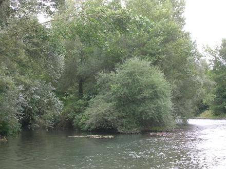 Peupleraies blanches et autrs forêts alluviales méditerranéennes - D. FALLOUR-RUBIO
